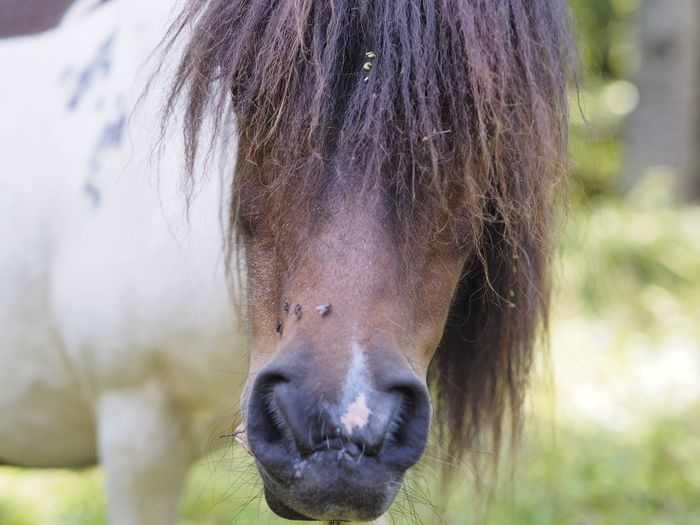Animal Animal Body Part Animal Head  Animal Mouth Animal Nose Animal Themes Animal Wildlife Close-up Day Domestic Domestic Animals Focus On Foreground Herbivorous Horse Livestock Mammal Nature No People One Animal Outdoors Pets Portrait Snout Vertebrate Working Animal