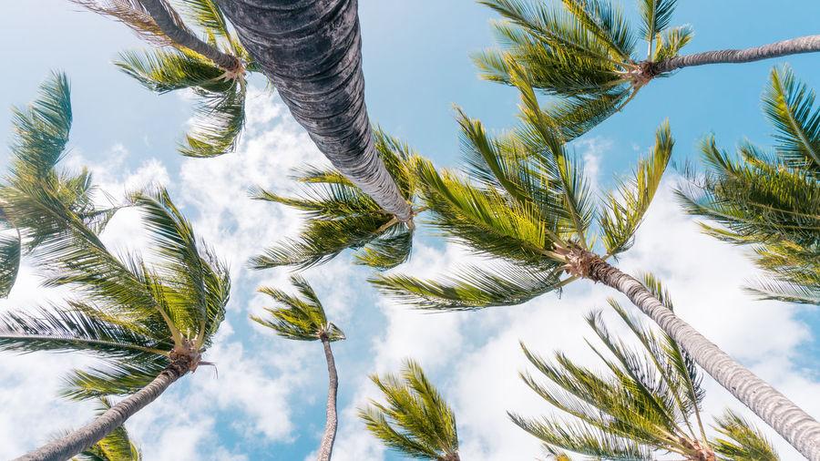 Windy Hawaiian