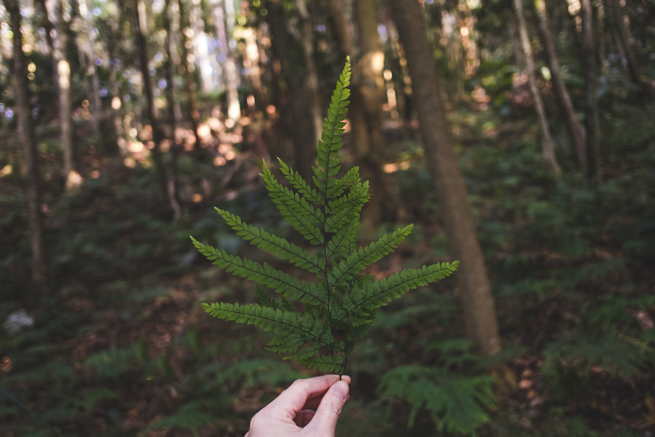 Cropped image of hand holding fern leaves in forest
