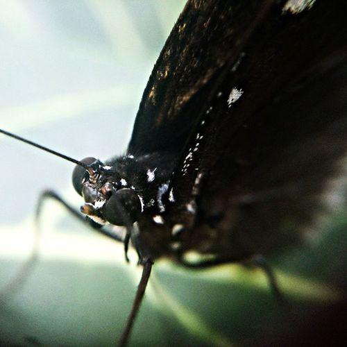 Just one day... Sony Nothingisordinary Macrophotography Jj_forum_1120 tuklas_pinaskalikasan natureAddict TagsForLikes mpph butterfly igers instagrammers instamood