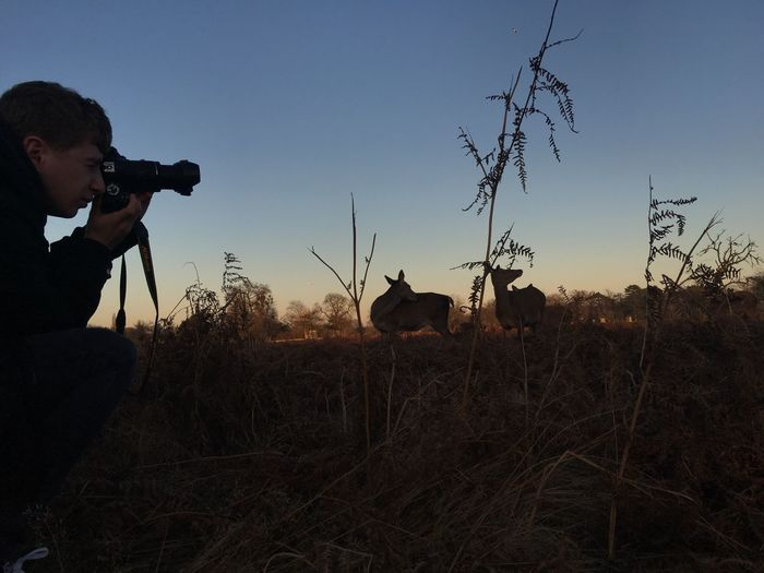Man photographing deer on field against sky during sunset