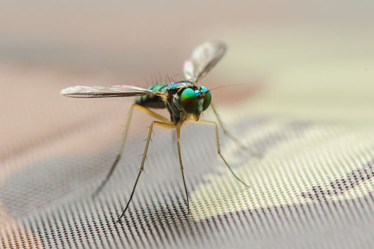 Close-up of fly on table