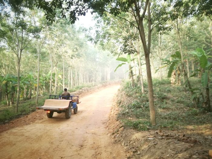 thailand Rubber Tree Tree Transportation Agricultural Machinery Nature Land Vehicle Rural Scene Agriculture Growth Day Outdoors Road People First Eyeem Photo