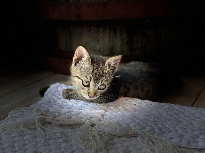 Portrait of kitten on rug