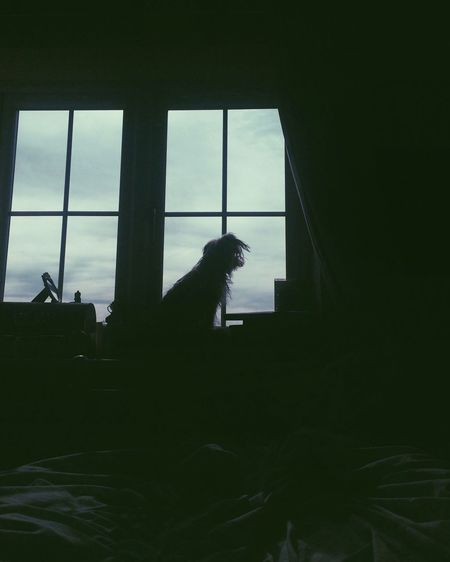 Low light Window Indoors  Silhouette Transparent Sky Day Zoology Lowlight Dog Puppy Dark Darkness And Light Atmospheric Mood Animals End Of Summer Light My Favorite Place Winter The City Light