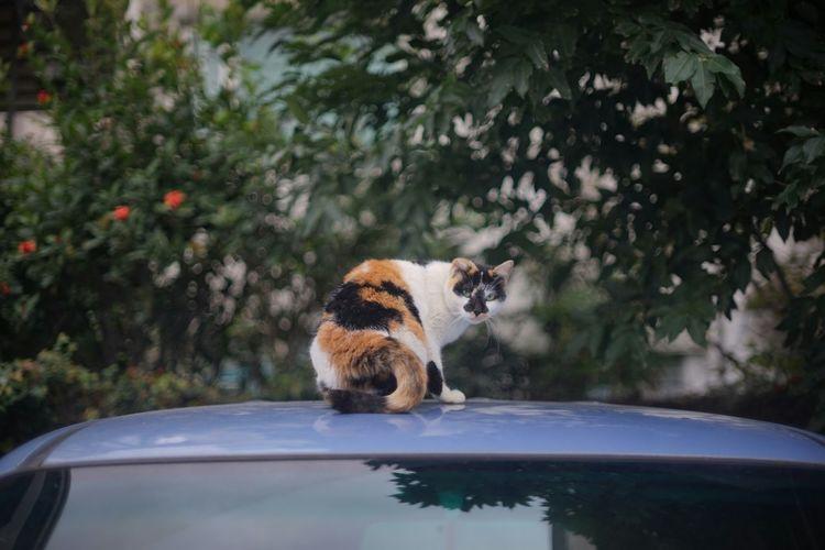 Portrait of cat on car roof