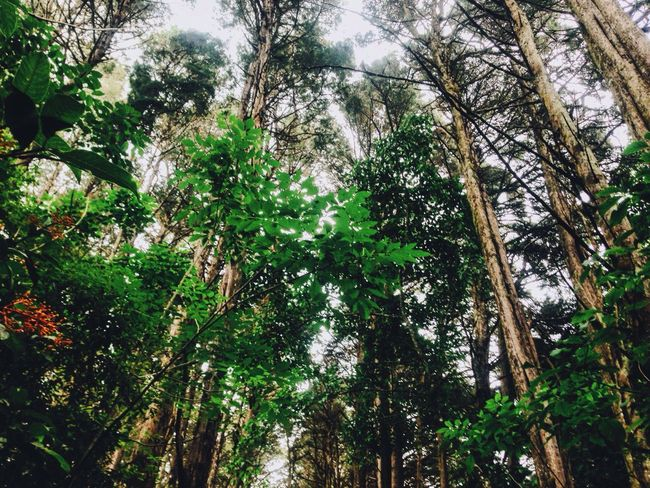 Trees Tall Green Brown Wood Beauty Nature Pretty Forest Light Sky Blue Leaves Bosque De La Hoja Quite Peace Costa Rica