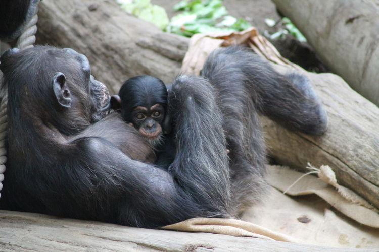 Monkeys sitting in a zoo