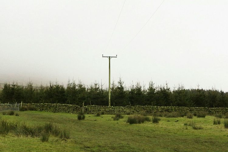 Tree Nature No People Rural Scene Outdoors Agriculture Tranquility Sky Day Beauty In Nature Telegraph Pole Green Color Field Tranquility Tranquil Scene Scenics Lush - Description Misty Days Misty Pendle Hill Landscapes Foggy Witches Winter Agriculture