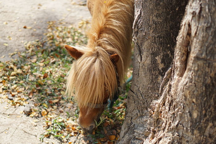 Pony Animal Themes Horse Livestock Nature No People One Animal Outdoors Pony Pet Portraits