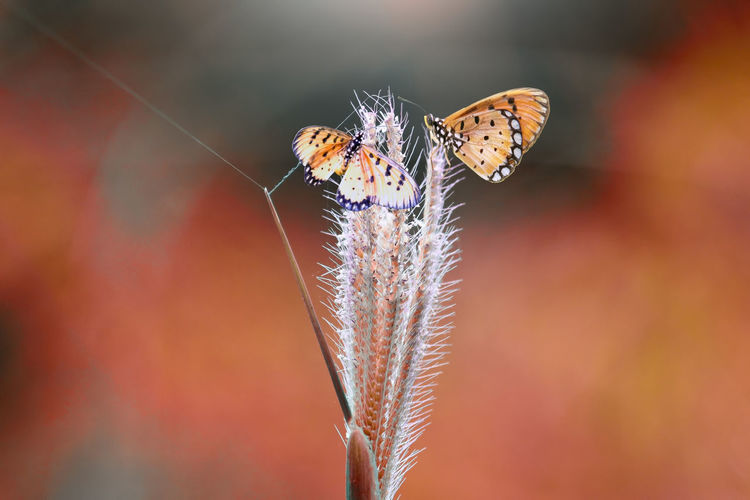 butterflies on twigs Invertebrate Animal Wildlife Insect Animal Themes Animal One Animal Close-up Animals In The Wild Beauty In Nature Plant Animal Wing Vulnerability  Fragility Nature Flower Focus On Foreground No People Day Butterfly - Insect Flowering Plant Outdoors Butterfly Pollination