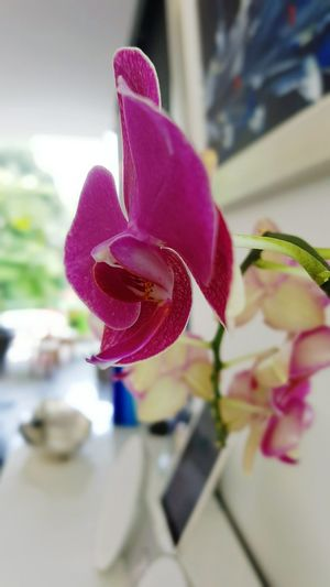 Orchid Flower Home Interior Pure Photography Focus On Flower Stem