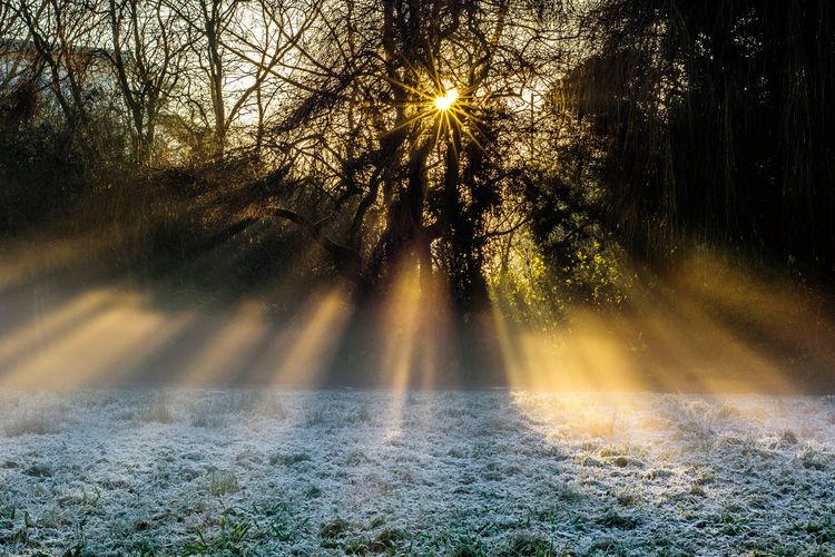 Mist Winter
