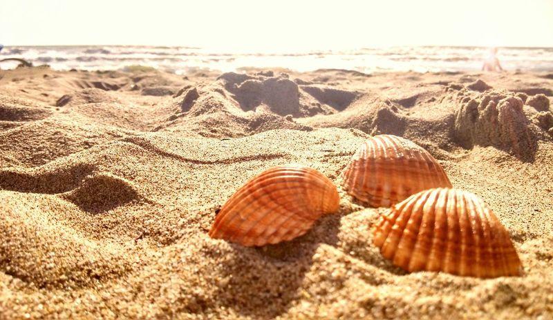Seaside Landscape Nature Conchiglie Summer Beautiful Nature