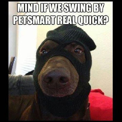 I got Tickled . Lol Meme Puppy Luciano  lol