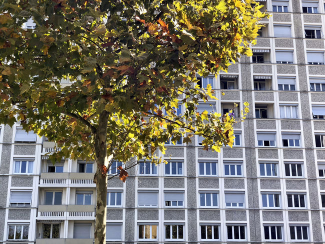 Apartment Architecture Branch Building Building Exterior Built Structure City Day Growth House Housing Development Low Angle View Nature No People Outdoors Plant Plant Part Residential District Row House Sunlight Tree Window