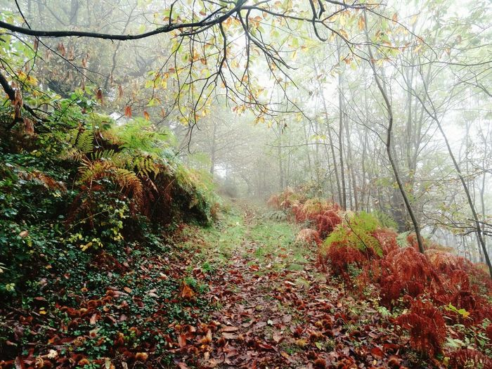 Tree Nature Beauty In Nature Outdoors No People Multi Colored Day Tranquility Scenics Autumn Colors Autumn🍁🍁🍁 Autumn Autumn 2016 Ardeche Fog Foggyday Forest Trail Leaves Warmcolors