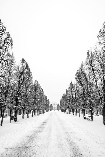 Cold Temperature Day Nature No People Outdoors Schönnbrunn Snow Snowing The Way Forward Tranquil Scene Tree Vienna Winter
