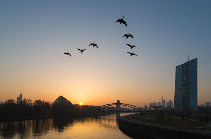 Silhouette birds flying over river by european central bank during sunset