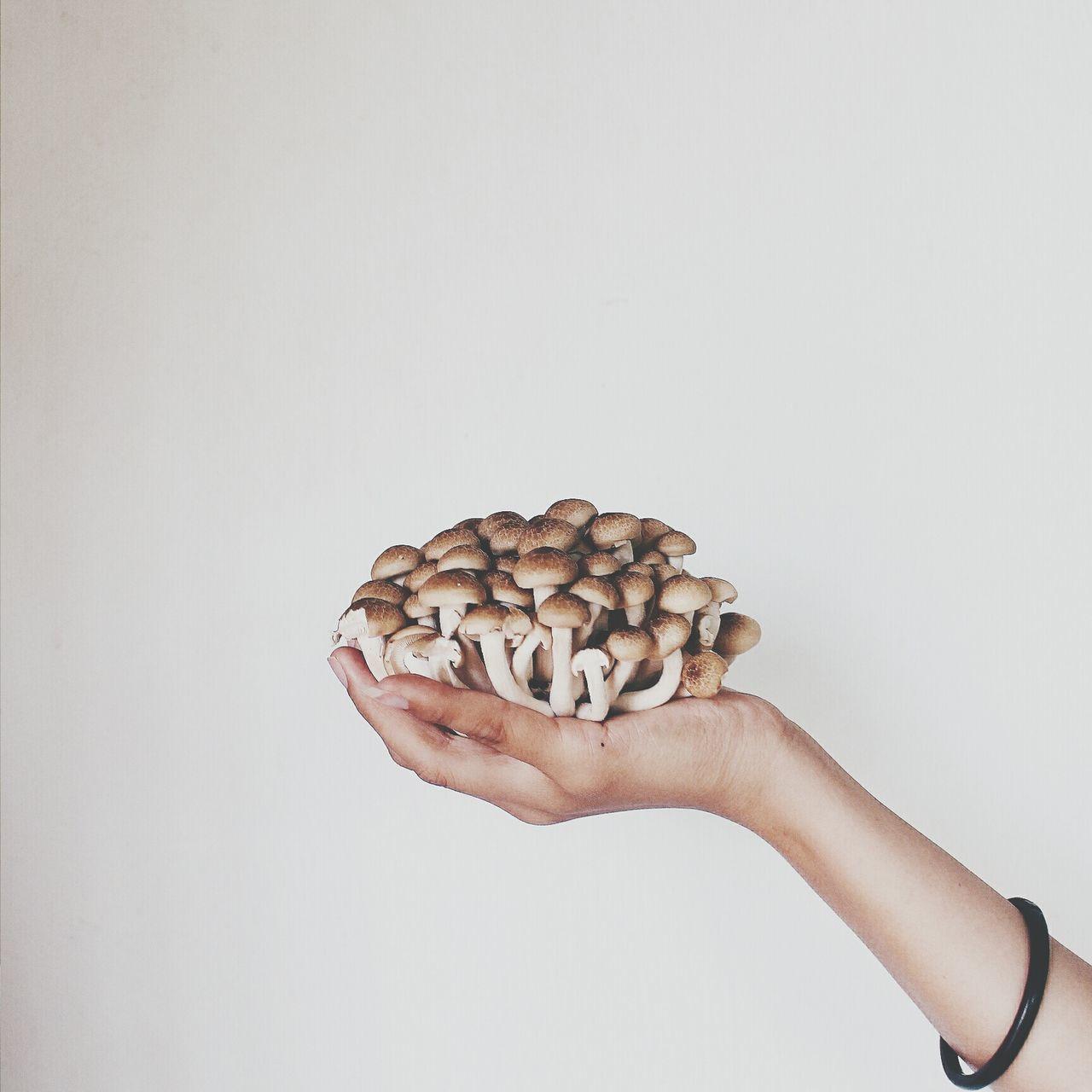 Studio Shot Of Mushroom In Human Hand