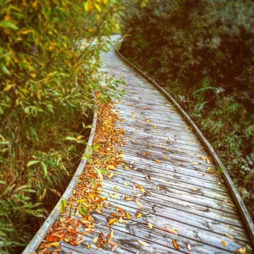 Narrow Pathway Along Plants