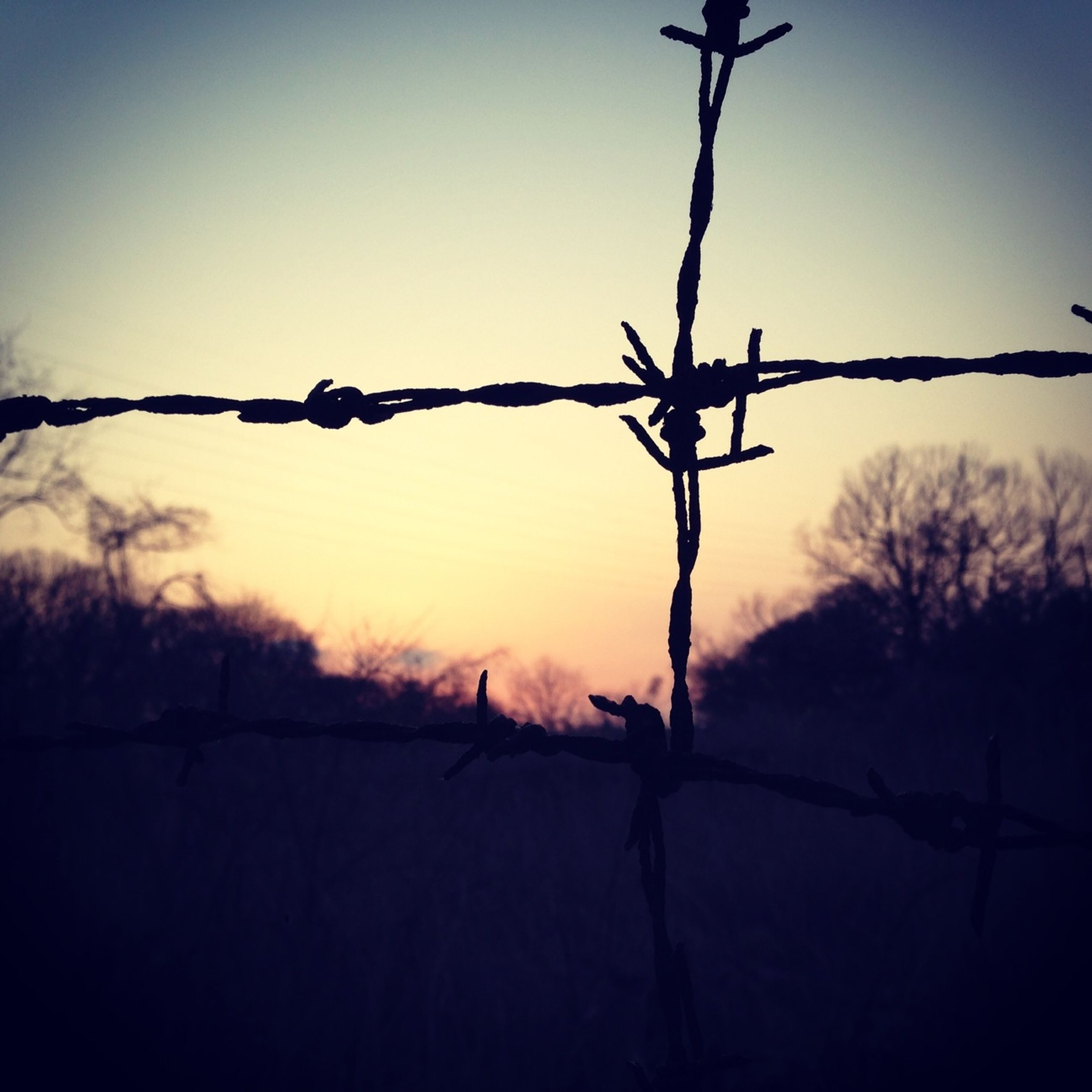 barbed wire, silhouette, sunset, fence, safety, branch, protection, security, bare tree, clear sky, focus on foreground, nature, sky, tranquility, metal, outdoors, wire, dusk, tree, chainlink fence