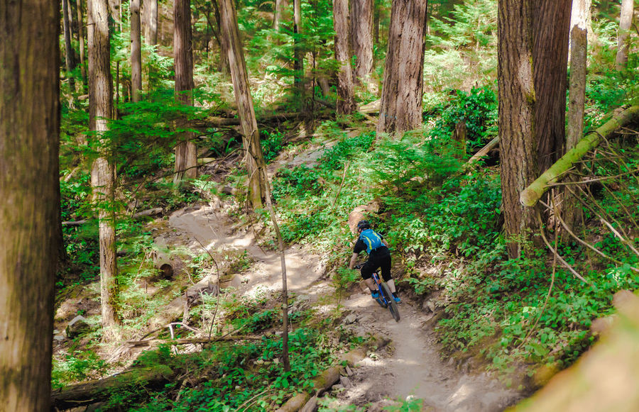 Adventure Biking Bikingadventure Canada Enduromtb Explore Forest Forest Park Lifestyles Mountainbike Northshore Singletrail Trailriding Tree Whistlerblackcomb