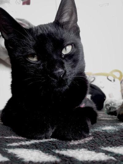 ¿donde te escondiste Satanas¿ Gato Negro