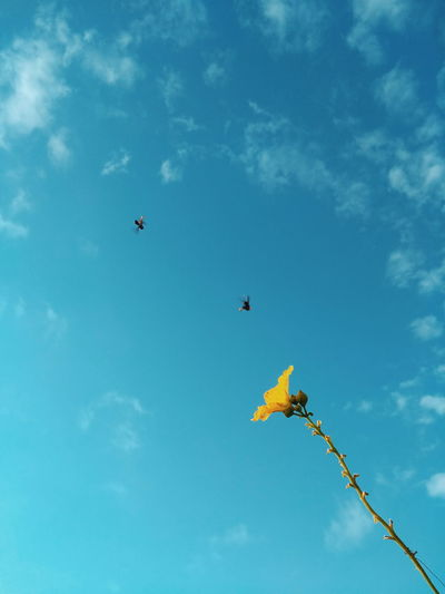 Flying Flower Blue Airshow Tree Multi Colored Sky Cloud - Sky Butterfly - Insect Animal Antenna Pollination Insect