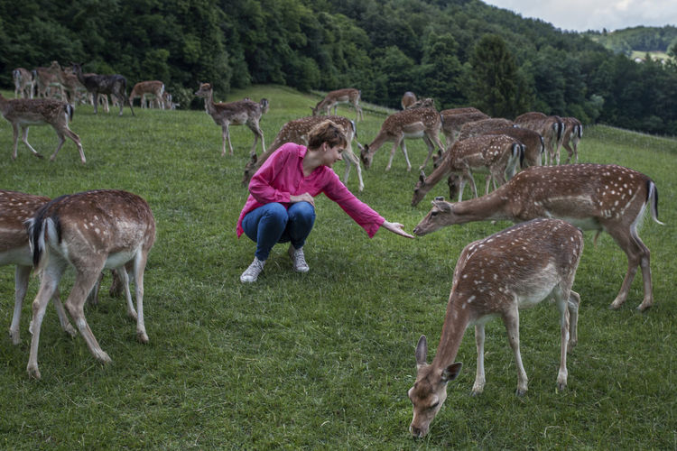 Woman crouching by deer on grassy field