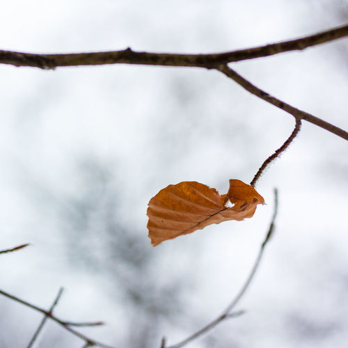 Close-up of dried leaf on branch
