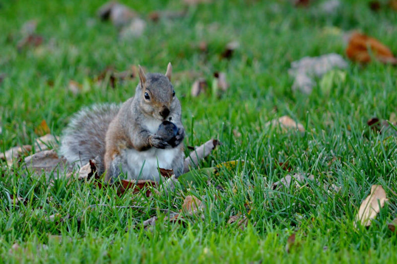 Squirrel sitting on land