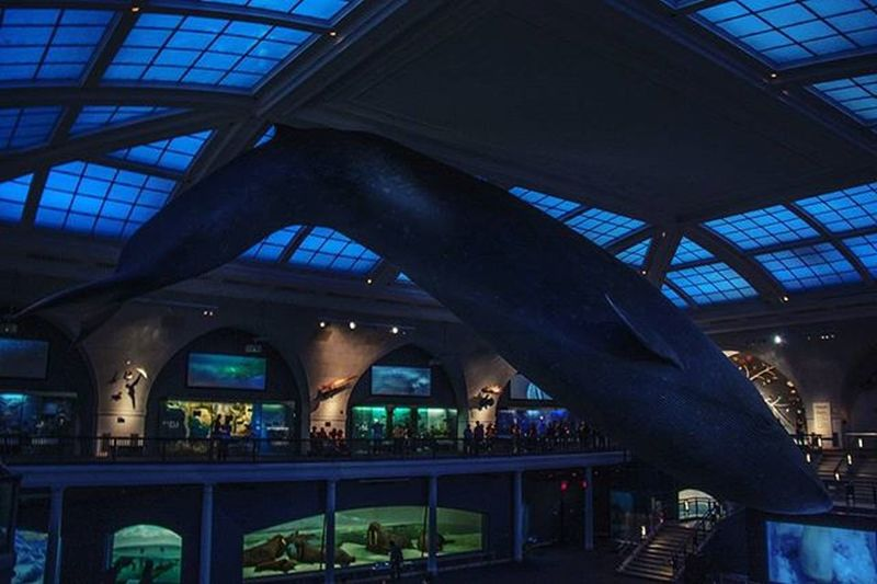 Blue whale at