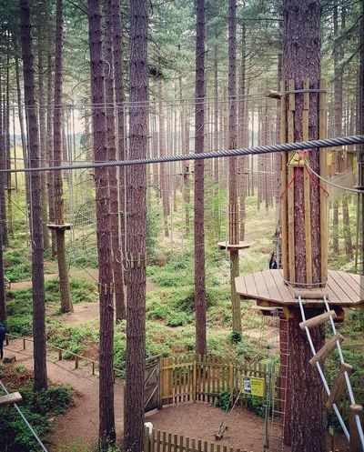 Go Ape! Outdoors Tree Nature No People Day Climb Climbing Adventure Ropes Arial Quiet Place  Beauty Sky Full Length Tree Sunlight Forest Beauty In Nature Myworld Mylife Nature Samsungphotography Adventurevisuals EyeEmNewHere Rewilding