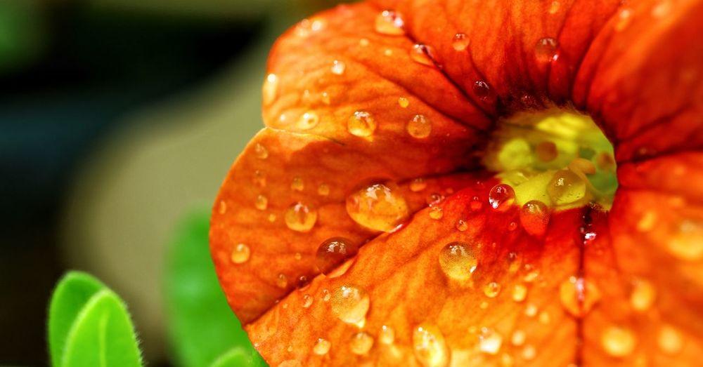Macro Flower &