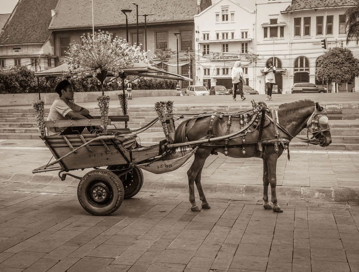 Horse cart in city