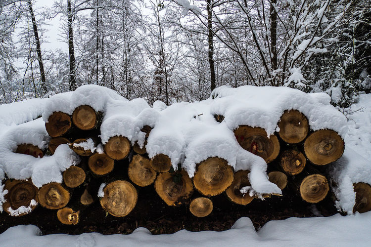 Forstwirtschaft - Wood Forestry Forestry Forstwirtschaft Holzindustrie Schnee Wood Cold Temperature Day Forestry Industry Nature No People Outdoors Snow Wald Winter