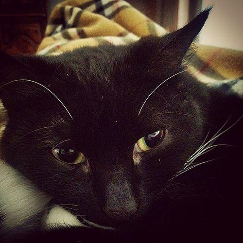 Chi ha paura del gatto nero? Cat Lizzy Gatto Gattonero IAmBeautiful Comemiamitunonmiamanessuno