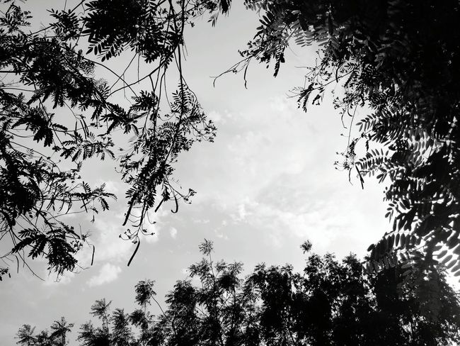 Nature Nature Photography Naturelovers Dawn Pleasant Art No People Close-up Sky Leaves🌿 Patterns In Nature Branches And Sky Branches Leaves Noflowers Eyeemselects Black And White Black Shadow Clouds Pattern Green Mixture  Bird Tree Flying Branch Flock Of Birds Leaf Sky