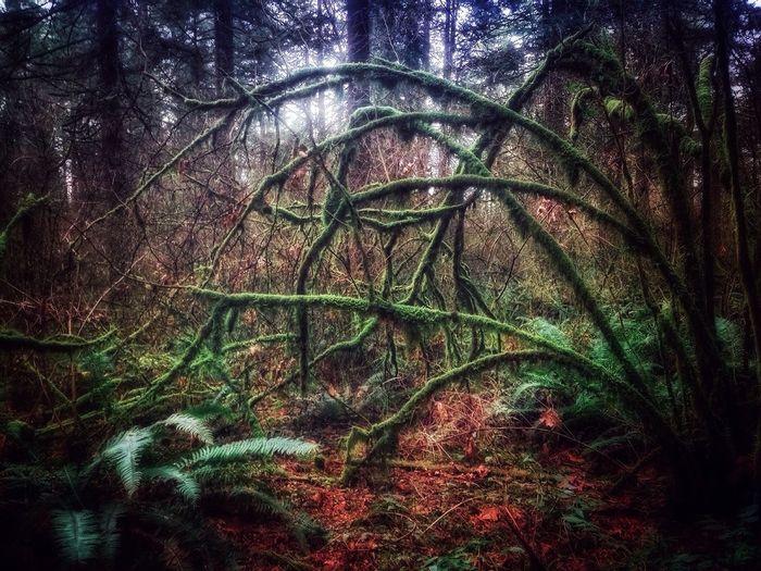 Moss Mossporn