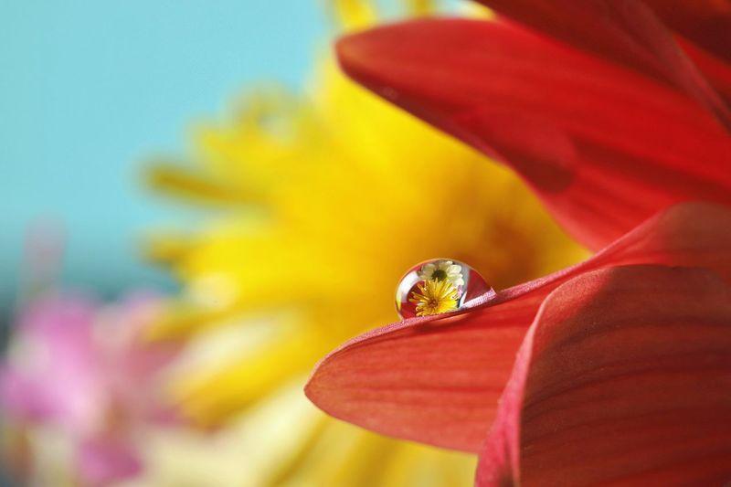 colours Flower