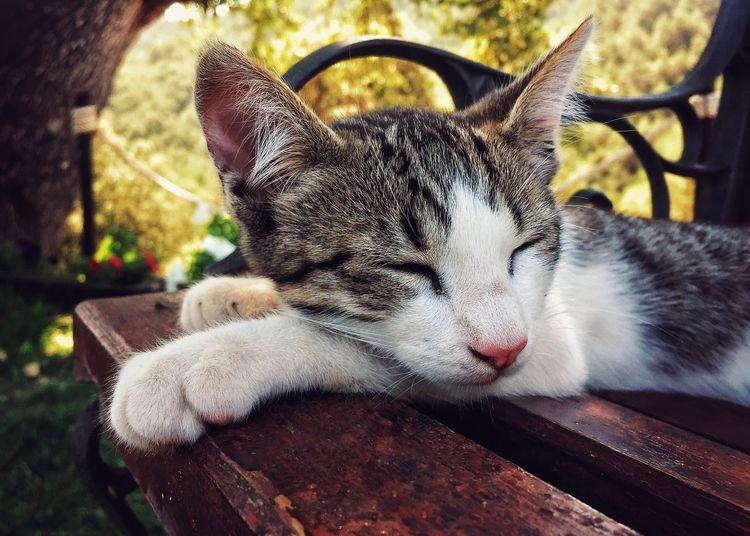 The little Misha... Eyes Closed  Nap Time Wildcat Relaxation Close-up Olot, Spain LaGarrotxa Hidden Places Catalunya Lying Down Sleeping Cat Catlifestyle Tuesdaymood Holidaysmodeon The Week On EyeEm Pet Portraits