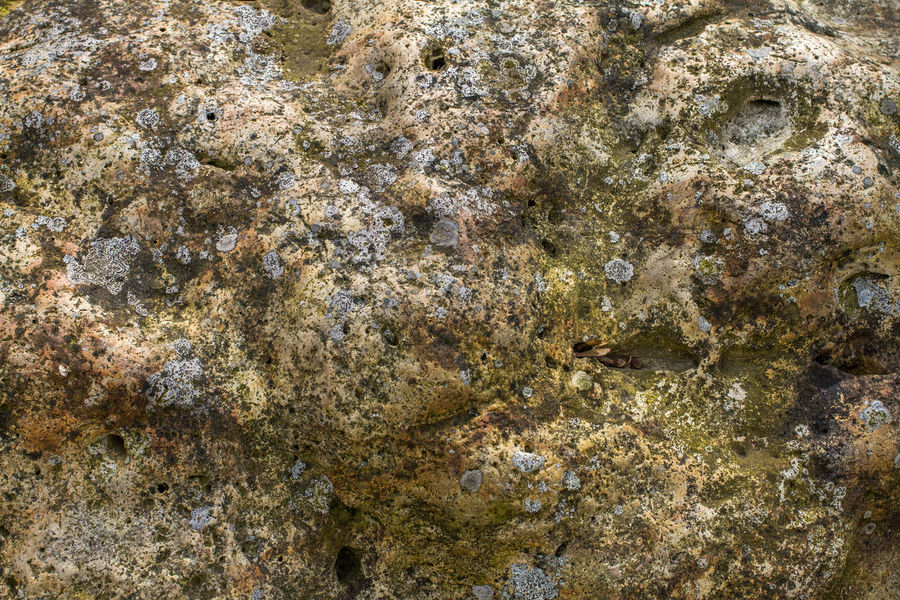 Beauty In Nature Nature Pattern Patterns In Nature Stone Material Stone Texture Stone Textures Texture Textures And Surfaces Textures In Nature