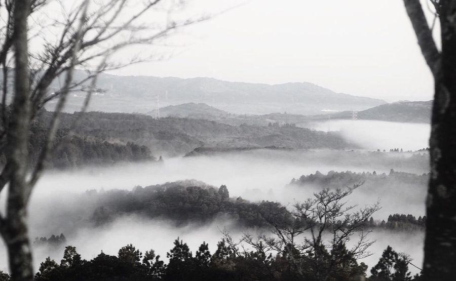 朝靄の Nature Carl Zeiss Jena Sonnar Outdoors Black And White