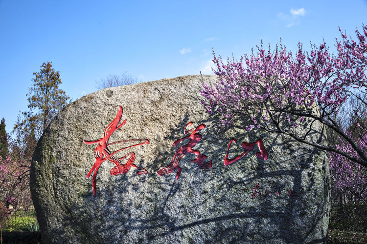 Plum blossom Views Tree Flower Plant Flowering Plant Nature Growth Day Beauty In Nature Freshness Pink Color Blossom Fragility No People Springtime Outdoors Plum Blossom Plum Blossom Views Plum Blossoms And Sky Rock - Object Rock Inscription Meihua Shan 梅花山