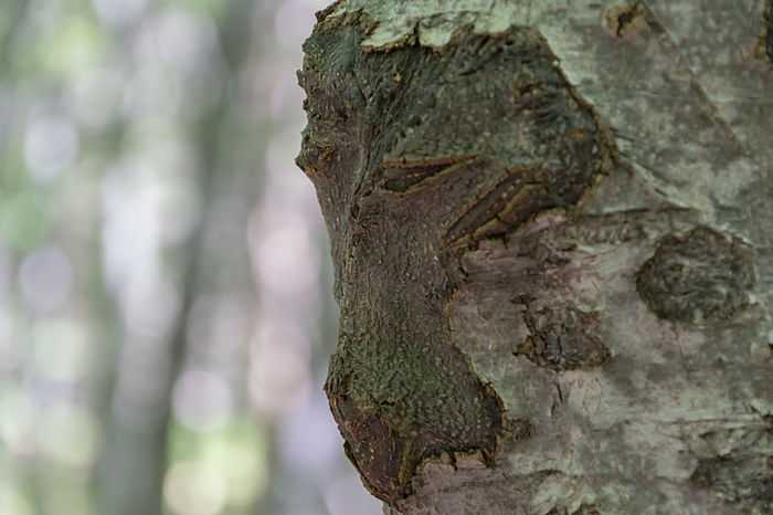 Beauty In Nature Close-up Day Nature No People Outdoors Textured  Tree Tree Stump Tree Trunk Vitosha Mountain Sofia, Bulgaria Wood - Material Face In Nature