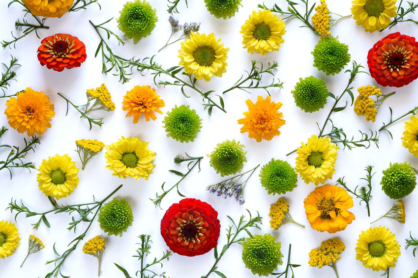 Full frame floral pattern on white background. Composition Green Color Above Arrangement Backgrounds Close-up Floral Arrangment Flower Flower Head Fragility Freshness High Angle View Leaves Multi Colored Nature Orange Color Pattern Petal Plant Red Springtime Variation Wallpaper White Background Yellow