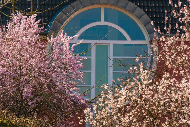 omega Architecture Building Exterior Tree Blossom Springtime No People Day Building Outdoors Pink Color Nature Flower Built Structure Arch Window Window Frame