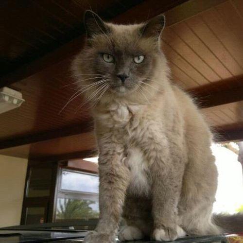 Mi lindo gato