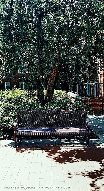 'Under the pear tree' Benchlovers Benches_Of_The_World_Unite Benches And Branches Bench Lover  Benchesoftheworldunite College Campus College Grounds Auburn University Auburn, Alabama Campus Grounds Android Photography Snapseed